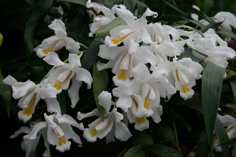wubben orchideeën nl